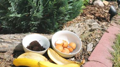 Dünger im Thermomix kostenlos aus Küchenresten selber machen